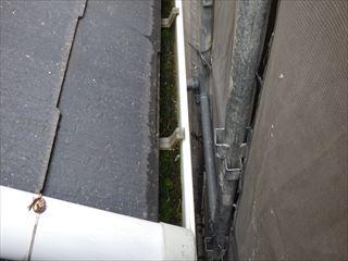 下屋の軒樋内の苔
