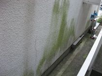外壁の苔2